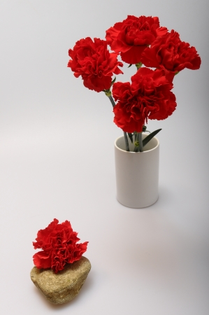liveliness: Red carnation flowers on a light background Stock Photo
