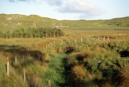 moors: Overview of moors and Connemara countryside in Ireland, Europe, under evening warm light