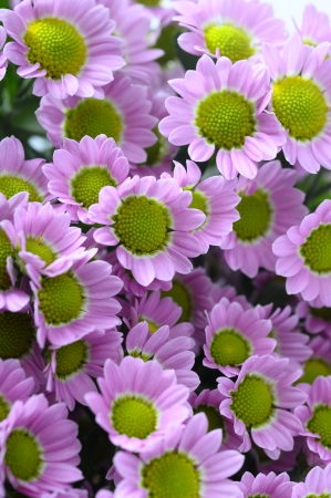Close up of small purple daisy flowers bouquet  photo
