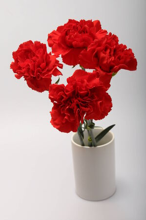 liveliness: Red carnation flowers on a light