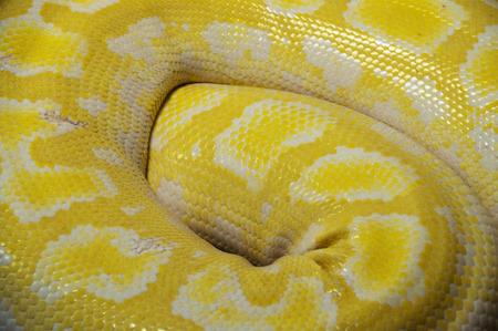 enrolled: Close up of snake skin Stock Photo