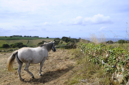 rural countryside: Landscape of horses, rural countryside, and sea in Arguero, near Gijon, Spain Stock Photo