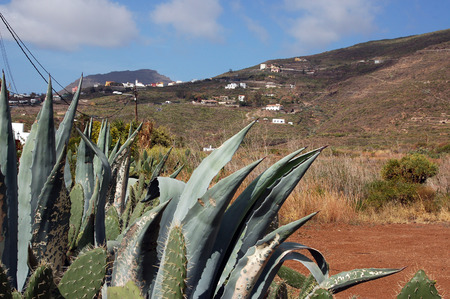canaries: View of Landscape, red land and cactus in Tenerife, Canaries