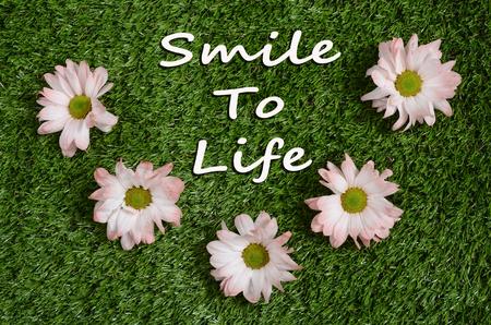 미소 잔디 톤 삶과 녹색 잔디밭에 핑크 데이지 꽃을 인용