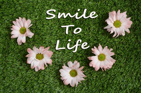 Quote smile ton life and Pink daisy flower on green lawn Stok Fotoğraf