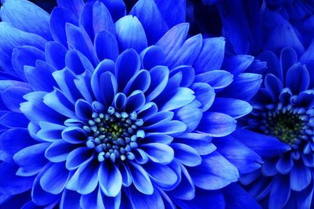 Close up of blue flower aster details for background 版權商用圖片