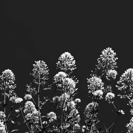 Black and white flowers decoration for texture or background, France 写真素材