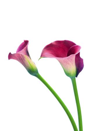 Close up of Purple arum flower bouquet