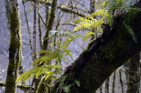 green ferns on tree trunk in forest in Savoy, France Stok Fotoğraf