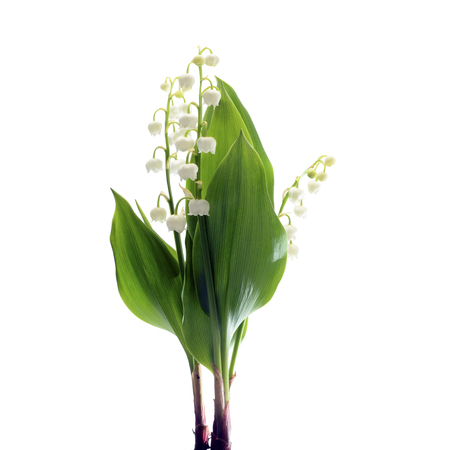 Lily of valley flower on white background Stock Photo