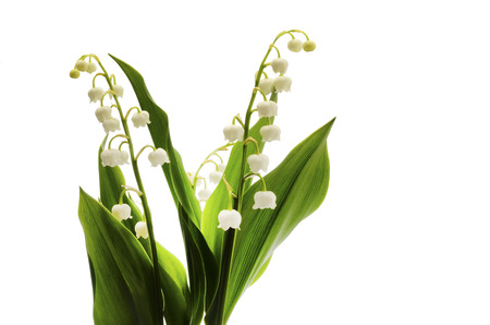 Lily of valley flower on white background 免版税图像 - 92630825