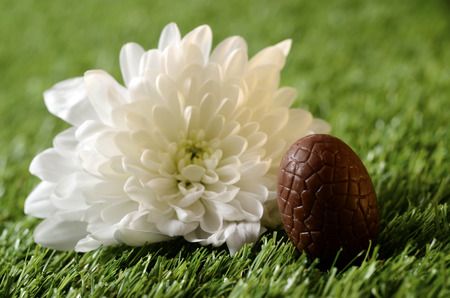 Easter chocolate eggs and white flower on green grass