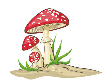 toadstool: Red Mushrooms