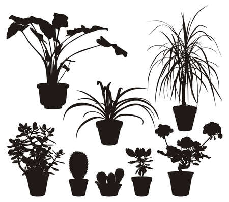flora vector: Home Plants Silhouettes