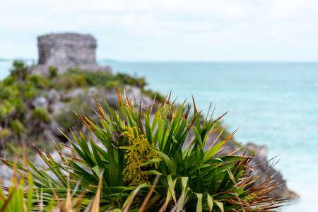 Tulum Ruins - Old Mayan landmark besides Caribbean Sea. Riviera Maya, Traveling America (popular travel destination, maybe after the Corona crisis) - Tulum, Mexico