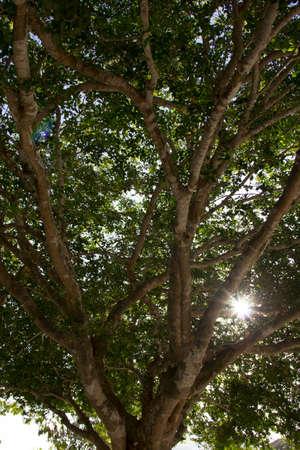 cocoa beach: MARGARITA NEW STATE ESPARTA Stock Photo