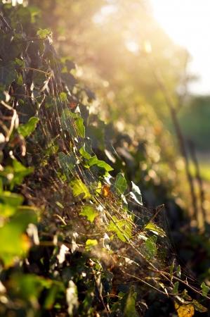 schittering: Schittering van de herfst