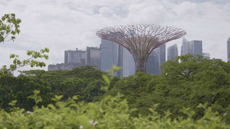 Singapore - January 20, 2020 : The Supertree Grove at Gardens by the Bay in Singapore near Marina Bay Sands hotel