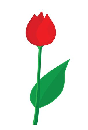 Red tulip Stock Vector - 16692548