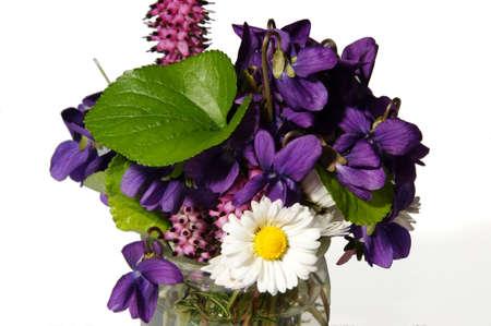 daisie: Immagine di fiori primaverili in bicchiere d'acqua. I fiori sono viole, margherite e fiori di campo.