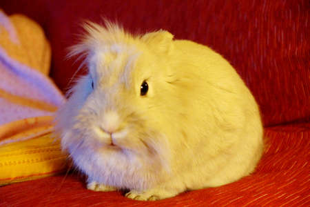 White Rabbit on colorful sofa cushions