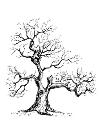 Illustration of a hand drawn tree made in a graphic style with pen and ink 免版税图像