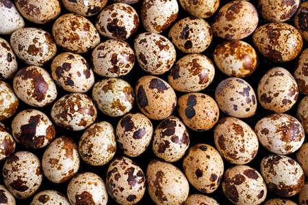 huevos de codorniz: Cierre de Orgánica Huevos de codornices fondo, la textura Foto de archivo