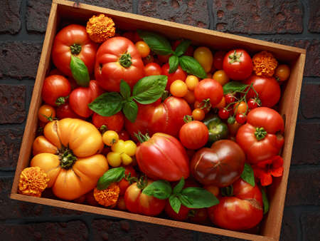 Freshly picked heirloom tomato harvest: pear shaped, beef heart, tigerella, brandywine, cherry, black. In wooden box