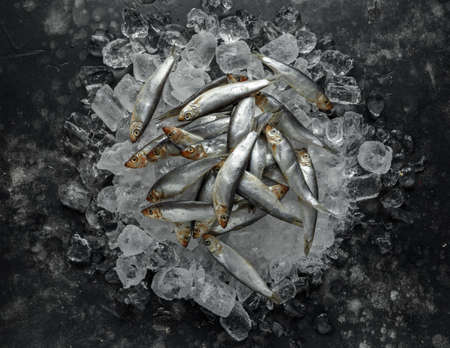 Fresh raw sprats, organic fish on ice Banco de Imagens
