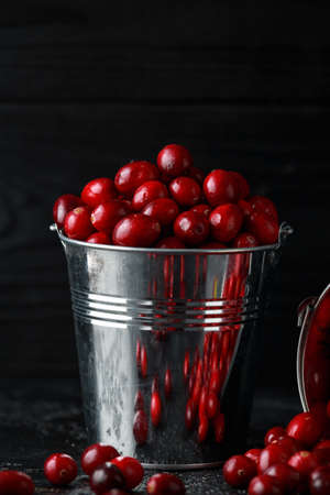 Cranberries in metal basket. Freshly picked, organic, rustic style.
