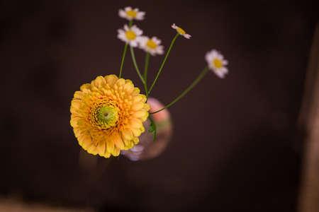flower in a light bulb