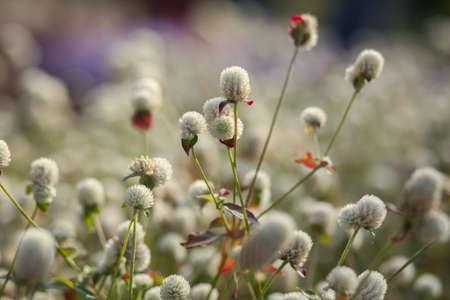 flowers in the sun Archivio Fotografico