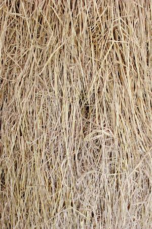 truss: Cluster straw, truss straw background in top view