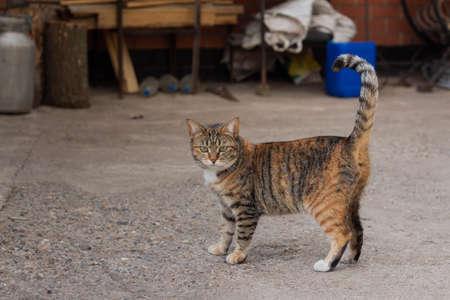 Beautiful domestic cat walks in the yard