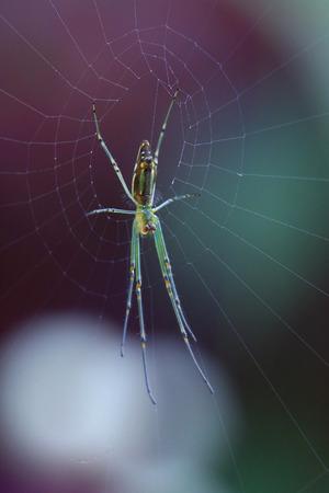 darkly: House Spider on the Web