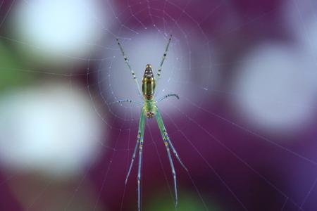 stranger: House Spider on the Web