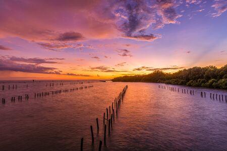 Sunset Mangrove Forest.