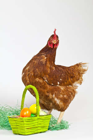 Hen with easter eggs is looking into the camera Stock Photo - 6302393