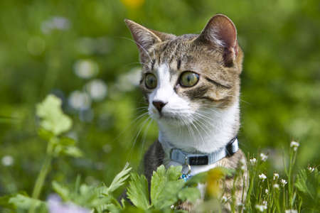 A attentive Cat in the green Grass Imagens