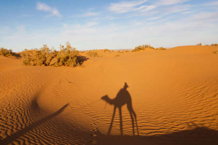 A Tourist on a Camel with a Berber, in the Desert of Morocco