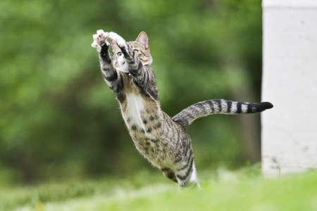Eine Katze ist eine Fliege aus, im Gras ansteckend ist. Standard-Bild