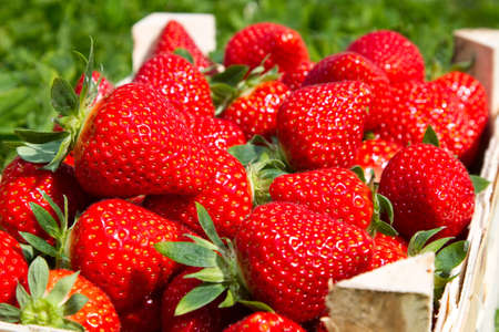 Many red Strawberries in a basket