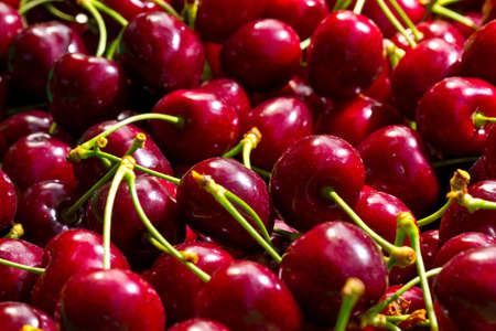 Many red Cherries, freshly picked from a Tree on a Farm!