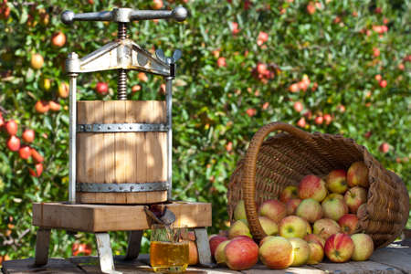 Some Apple gets pressed to a fresh Apple Juice. Some Apple Trees are behind it. photo