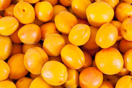 A punch of many Apricots lying around after harvest Imagens