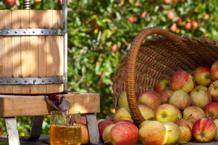 cider: Some Apple gets squeezed to a fresh Apple Juice. Some Apple Trees are behind it. Stock Photo