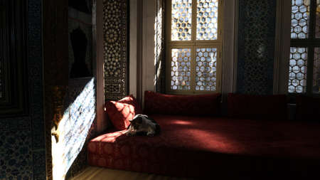 Cat on the couch in the middle east.