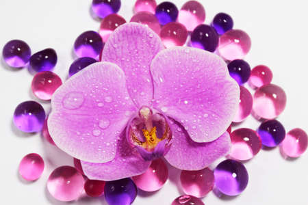 Orchid Stock Photo - 13692650
