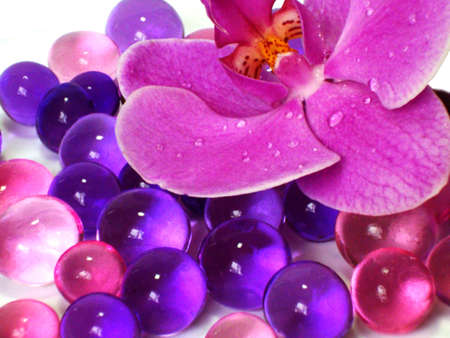 granules: Orchid in the granules
