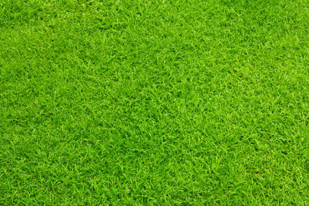 Green grass in garden background photo